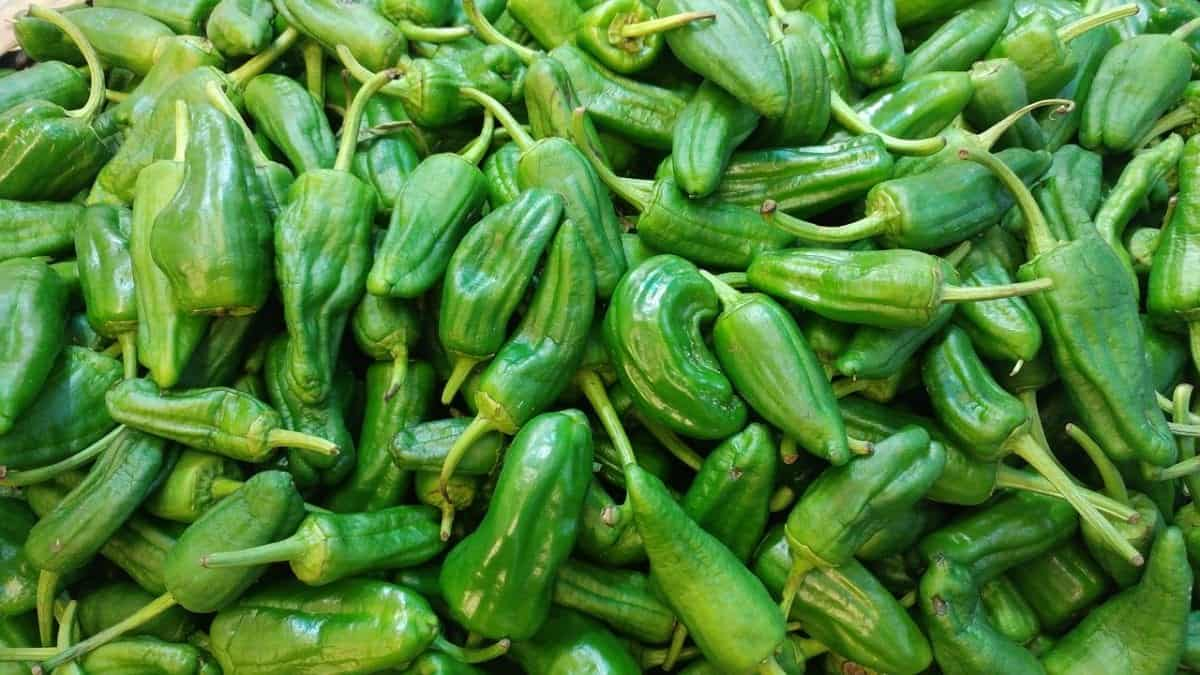 Can You Freeze Padron Peppers